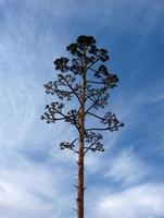 Isolated tree with the clouds at the background