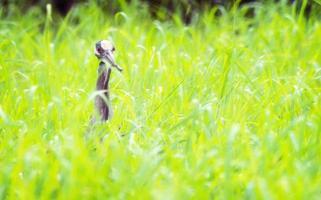 Heron Fishing photo