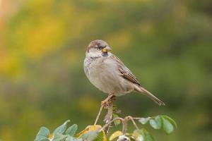 Sparrow against foliage