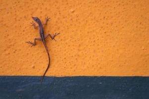 Anole on Wall