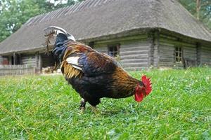 polla foto