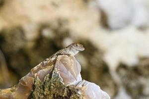 anole lagarto olhando para fora