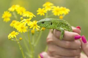 Caught Lizard photo