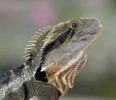 dragón de agua en perfil foto