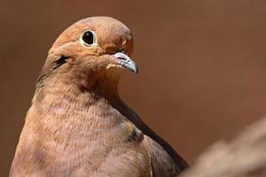 Dove Peering In photo