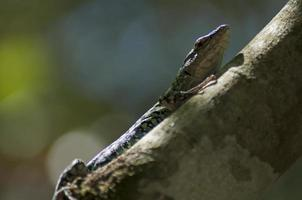 lagarto en un tronco