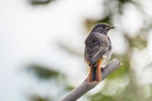 Redstar photo