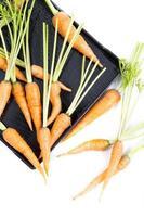 fresh baby carrot photo