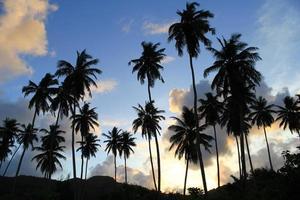 puesta de sol, palmeras. foto