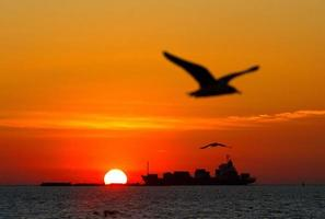 Sunset and Silhouette seagull