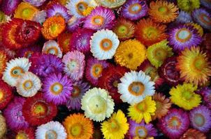 flores foto