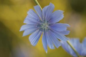 Flower. photo