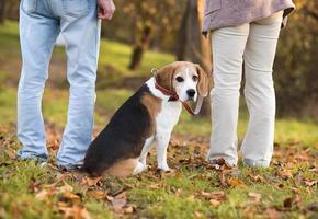 Beagle sitzt zwischen zwei Personen im Freien