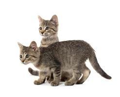 dos gatitos atigrados foto