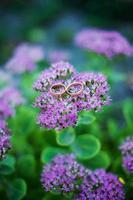 photo anneaux de mariage sur violet