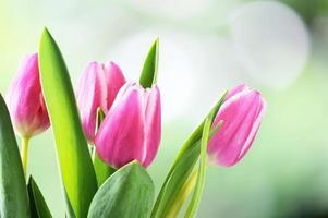 Bunch of Tulip Flowers