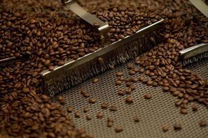 Machine tray processing bulk roasted coffee beans