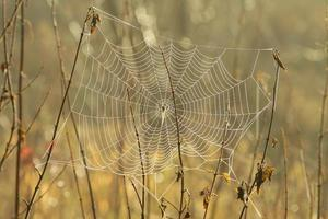 Close-up of spider web at dawn