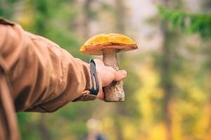 Orange-cap boletus Mushroom in man hand outdoor Lifestyle