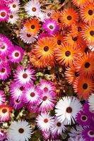 Flores coloridas foto