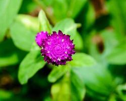fundo flor