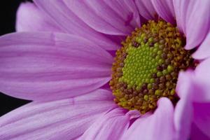 primer plano de flores