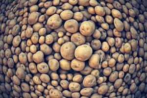 raw potatoes, Solanum tuberosum L