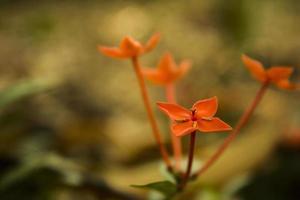 rode bloem