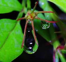 water droplet. photo