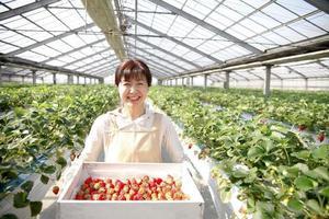 cultivadores de fresas