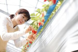 Strawberry growers photo