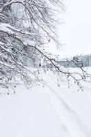 mujer de mediana edad con raquetas de nieve foto