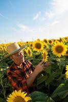 Senior farmer in a field examining crop
