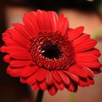 Blumen photo