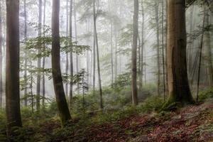 mistige zomerbos