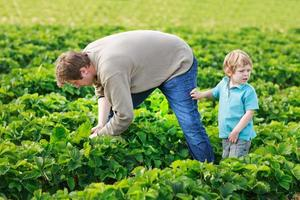 padre y niño de 3 años en la granja de fresas