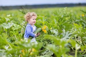 Little baby girl walking on farm field gathering ripe zucchini