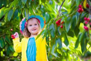 Beautiful little girl picking fresh cherry on a farm