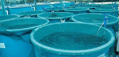 Blue pools with nets over them at agriculture aquaculture