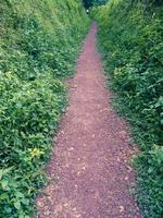 camino tranquilo foto