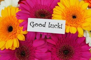 Good luck card with colorful gerberas photo