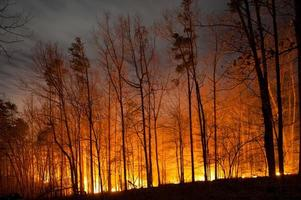 bosbrand branden 's nachts