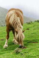 Mountain horse photo