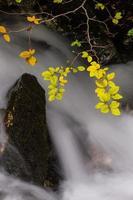 folhagem de outono e fluxo que flui