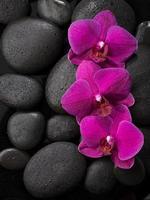 Three purple orchids