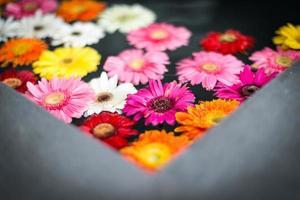 Hermosas flores multicolores en el agua. foto