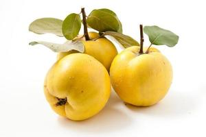 Fresh yellow quinces photo