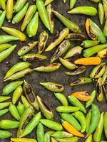 Chiles roasting