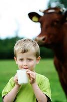 joven bebiendo leche delante de una vaca foto