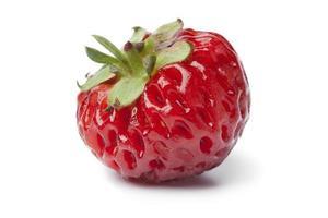 Single fresh ripe strasberry